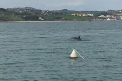 Avvistamento Delfini (Numana)